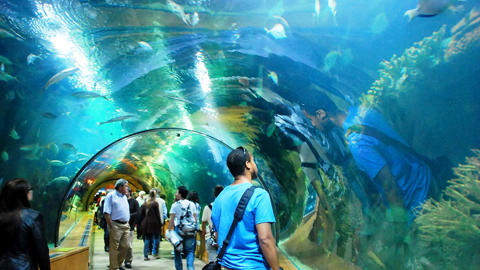 Aquarium-Beautiful